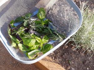 Bylinková zahrada - košík